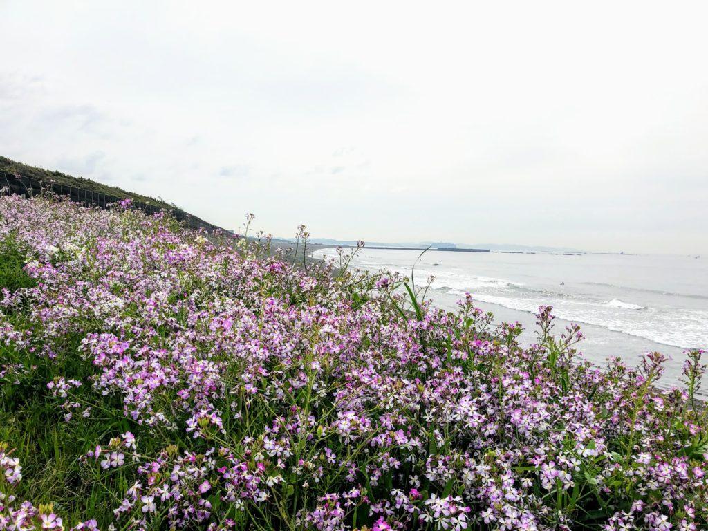 お庭づくりは海辺の散歩から