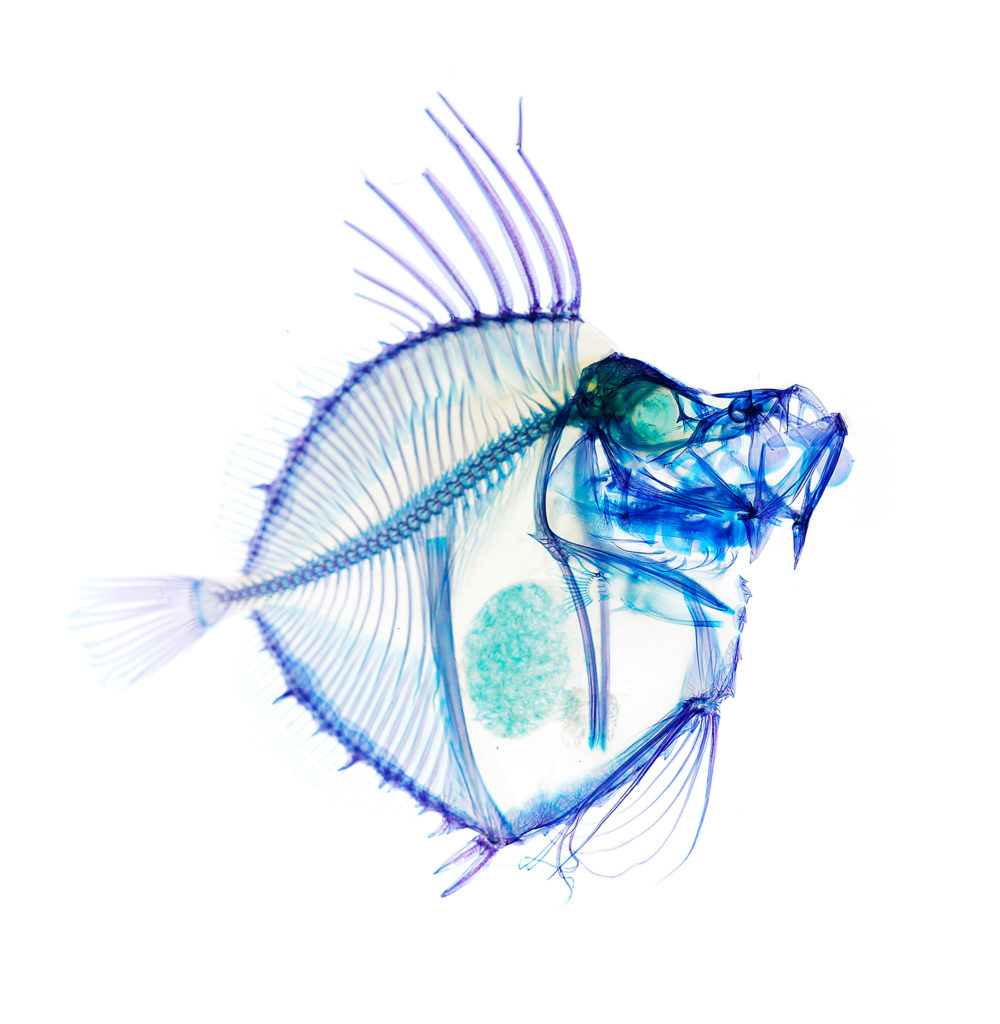 新世界『透明標本』の不思議展