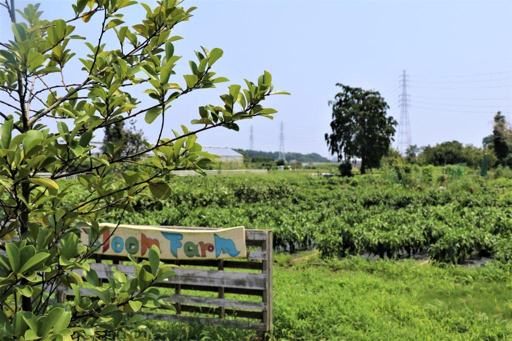 土と触れ合うひと時。湘南のレンタルファームで過ごす。